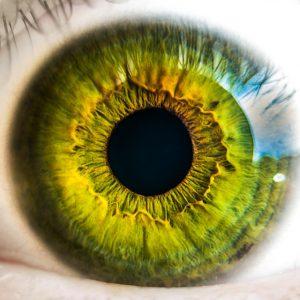 Bases de l'optique : Anatomie de l'œil et amétropies